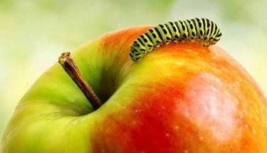 Canan Karatay'dan kurtlu elma tavsiyesi
