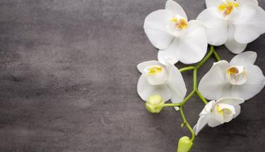 Orkide bakarken dikkat edilmesi gereken püf noktalar!