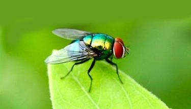 Sizi sineklerden kurtaracak öneriler