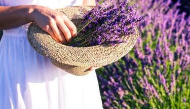 Baharın simgesi lavanta çiçeğini yetiştirmenin püf noktaları!