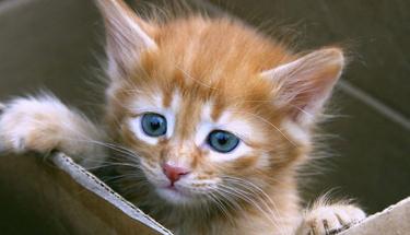 Kedi tüyü dökülmesi nasıl önlenir?