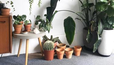 Hangi bitki hangi toprakta yaşar?