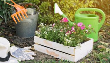 Bahçedeki bitkilere zarar vermeyen ilaç tarifi!