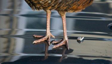 İşte kuş pisliğini temizlemenin en kolay yöntemi!