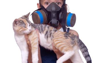Kedi kumu nasıl temizlenmeli?