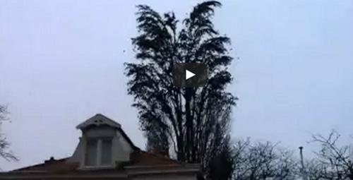 Sıradan bir ağaç gibi göründüğüne bakmayın!