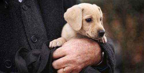 Köpekler prostatı teşhis edebiliyor!