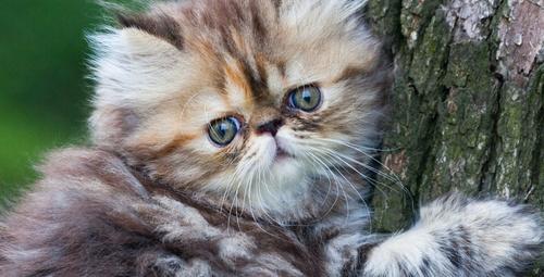 Mart döneminde kedilerin nelerine dikkat edilmeli?