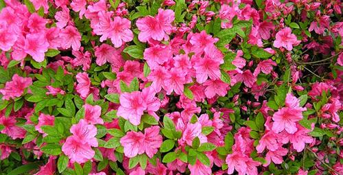 Rengarenk kış çiçekleri
