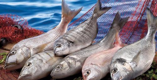 Hangi ay hangi balık yenir? İşte taze balık yeme takvimi...