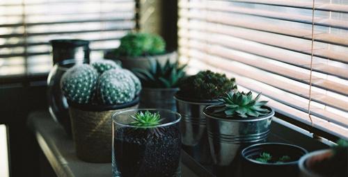 Bakımı oldukça kolay olan bu bitkiler ile evinizde sürprizler yaratın!