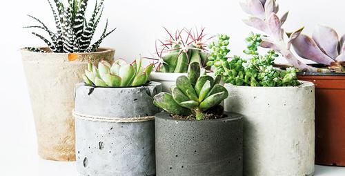 Bakımı kolay ev çiçekleri