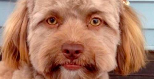 İnsan suratlı köpeği gördünüz mü 'bakamıyorum' diyen bile var!