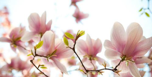 İlkbahar'da mevsim çiçekleri ile kendinizi şımartın!