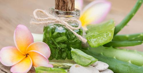 Doğanın mucize bitkisi aleo vera kullanımı nasıl olmalı?