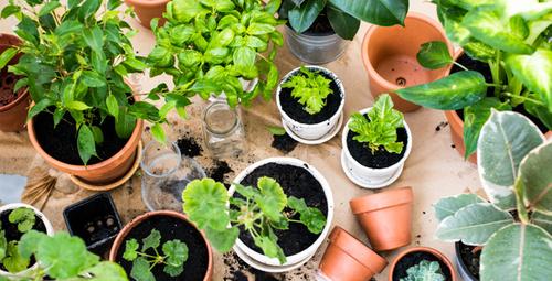 Evde kendi sebze ve meyvenizi yetiştirmek istiyorsanız...