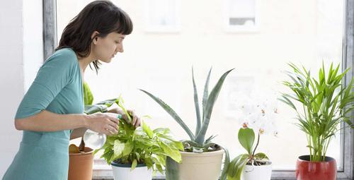 Bu çiçeklerle evinizin havası tertemiz olacak!