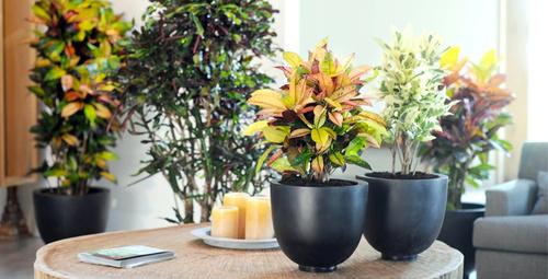 Ev veya ofis için bakabileceğiniz harika çiçekler