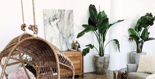 Evlerin vazgeçilmez süs bitkisi kauçuk bakımı nasıl olur?