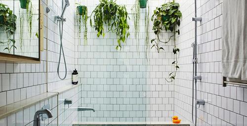 Banyonuzda bu bitkilere yer açın!