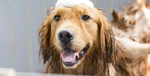 Köpekler hangi aralıklarla yıkanmalıdır?