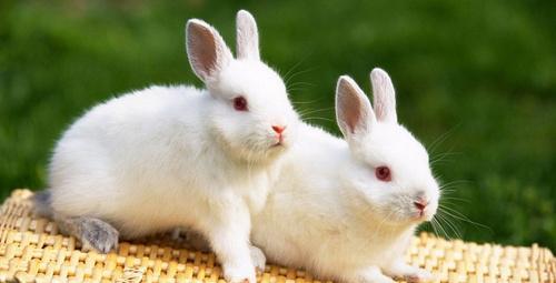 Evde tavşan bakarken bu hataya düşmeyin!