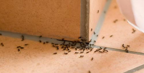 Evdeki karıncalardan kurtulmanın 3 pratik yolu!