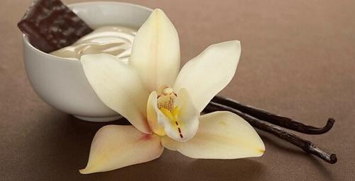 Kokusuna aşık olduğumuz vanilya hayat kurtarıyor!
