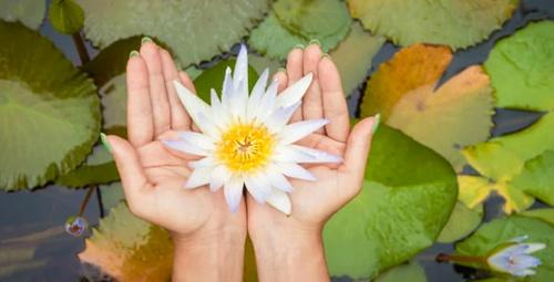 Nilüfer çiçeğinin bu faydasını duyunca çok şaşıracaksınız!