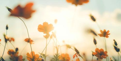 Sonbahara renk kazandıran 10 mevsim çiçeği!