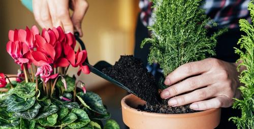 Evde bitki yetiştirmek için 5 harika neden!