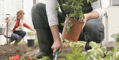Daha yeşil ve parlak bitkiler için yumurta!