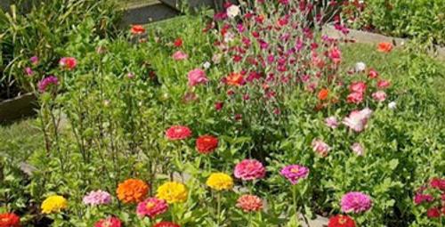 Bahçeniz yaz mevsimine hazır mı?