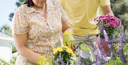 Temmuz ayında hangi çiçekler dikilir?