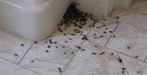 Evinizi karıncalar bastıysa…