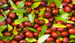 Hünnap meyvesi nedir kanser türlerini önlüyor!