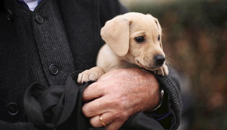 Prostat teşhisinde köpekler kullanılıyor!