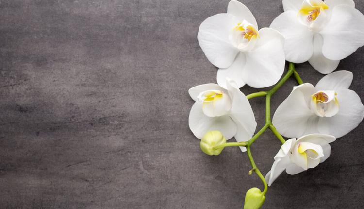 Orkide nasıl bakılır saf su ile sulamaya özen gösterin!