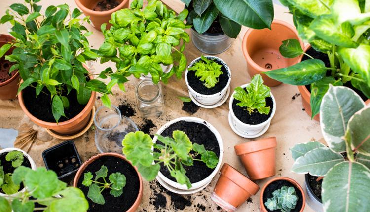 Evde sebze meyve yetiştirmenin 5 altın kuralı bu yöntemleri deneyebilirsiniz!
