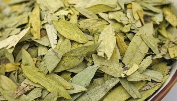 Sinamekinin zararları nelerdir zayıflama çayınızda bu varsa bağırsaklarınız iflas ediyor