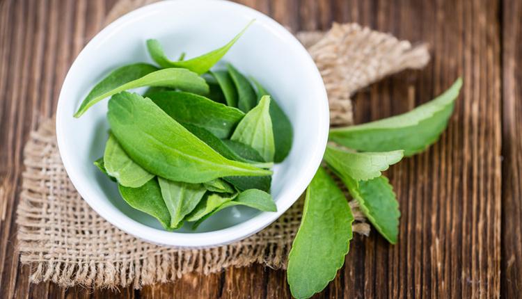 Stevia bitkisi ne işe yarar nikotin isteğini azaltıyor!
