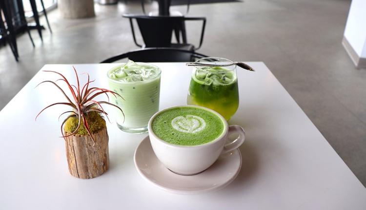Matcha çayı faydaları neler yeşil çayla aynı bitkiden geliyor!