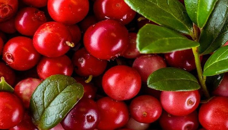 Kekreyemiş meyvesi faydaları neler karaciğer yağlanmasını yok ediyor!