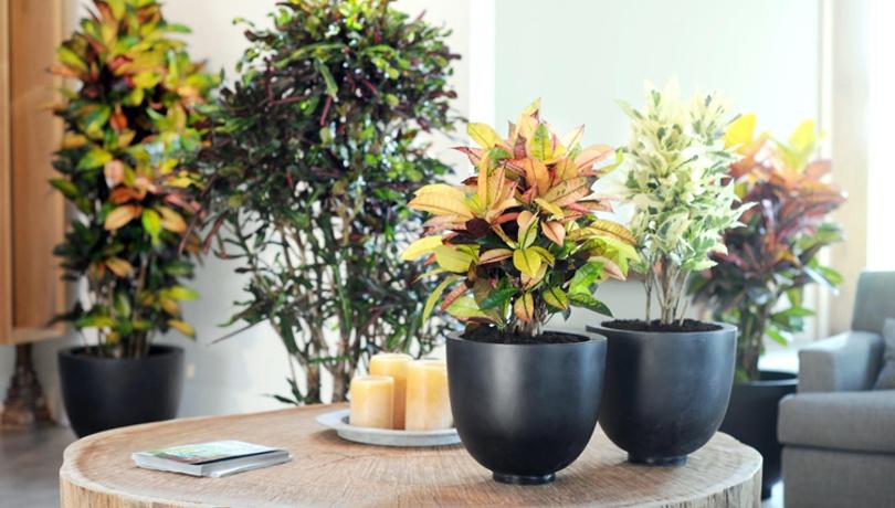 Ev bitkilerine kış bakımı tüyolar