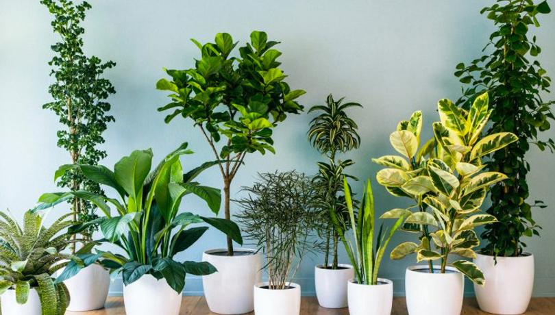 Evin havasını temizleyen 10 muhteşem bitki!