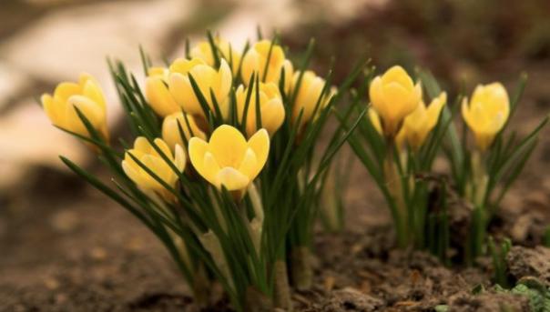 Ilkbahar çiçekleri Nelerdir Baharda Açan çiçek Isimleri Nelerdir
